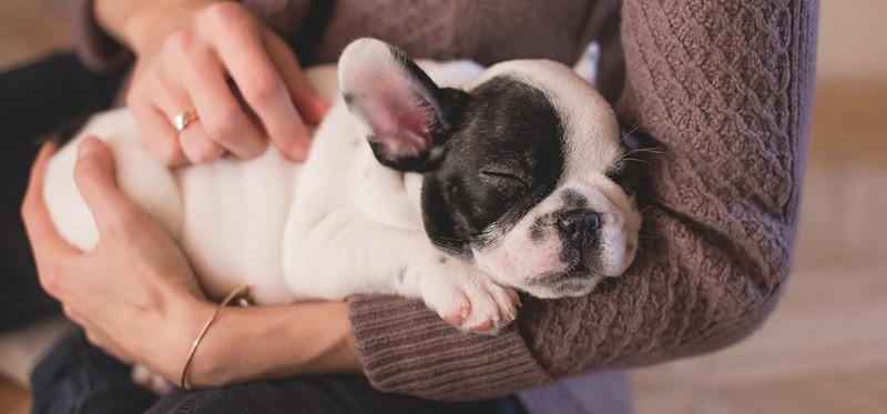 nicchia di cucciolo