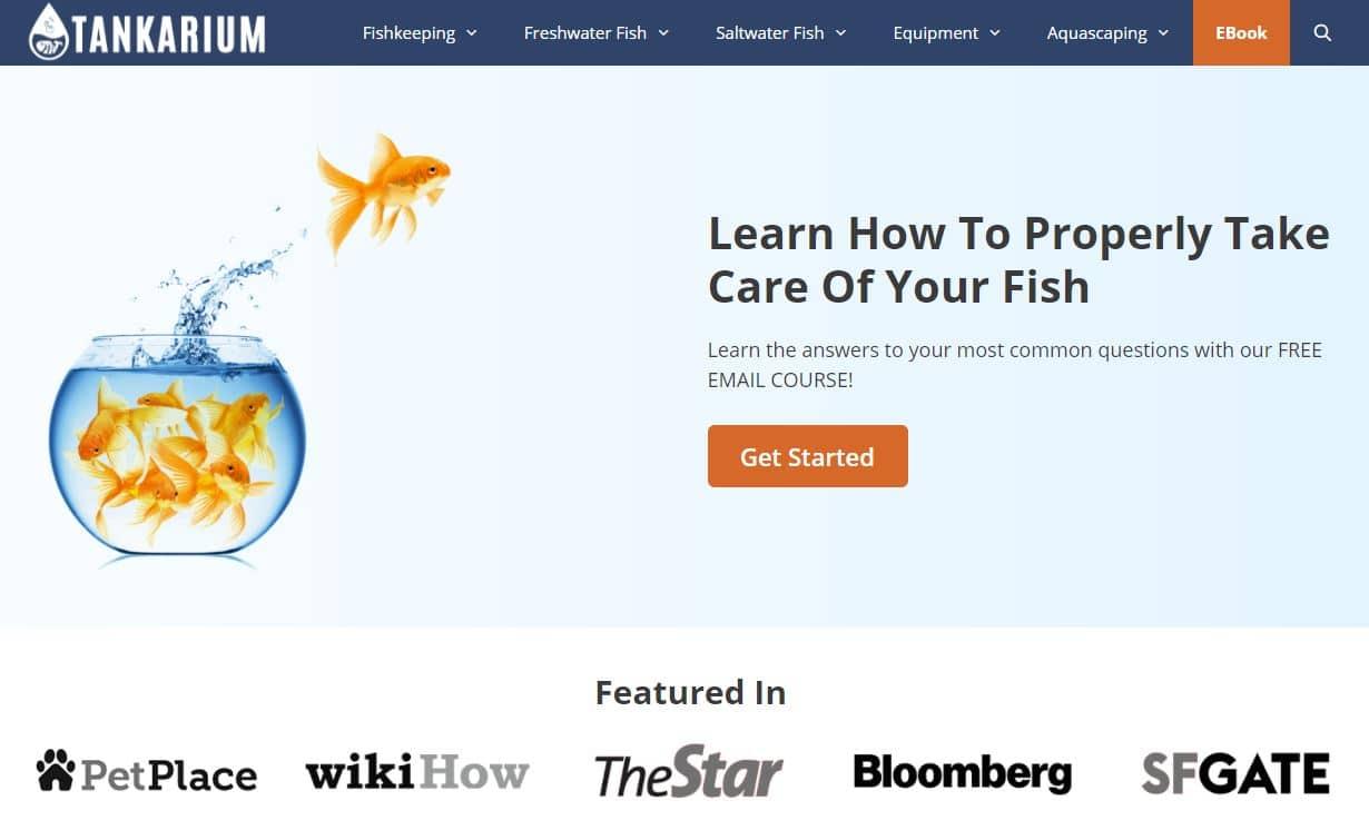 popular websites